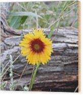 Amber Wheels Blanket Flower Wood Print