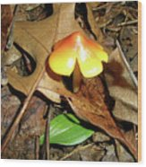 Amberina Mushroom - Tiny Jewel In The Forest Wood Print