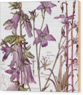 Ambrosia Vii Wood Print