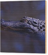 American Alligator Sleeping Wood Print