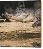 American Alligator Suns Itself Wood Print