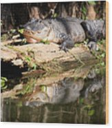 American Alligator With Caterpillar Wood Print