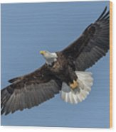 American Bald Eagle 2017-18 Wood Print
