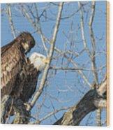 American Bald Eagle 2017-19 Wood Print