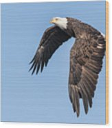 American Bald Eagle 2017-5 Wood Print