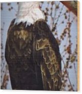 American Bald Eagle - Iowa Wood Print