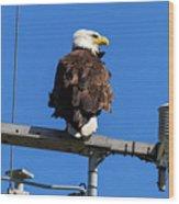 American Bald Eagle On Communication Tower Wood Print