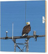 American Bald Eagle Perched On Communication Tower Wood Print