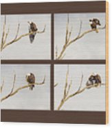 American Bald Eagle Progression Wood Print
