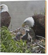 American Bald Eagles, Haliaeetus Wood Print