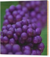 American Beautyberry Wood Print