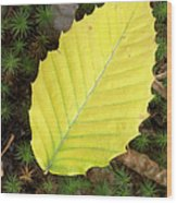 American Beech Leaf Wood Print