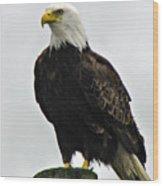 American  Bird Wood Print