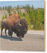 American Bison Sharing The Road In Yellowstone Wood Print