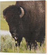 American Bison Tongue Wood Print
