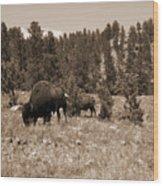 American Bison Vintage Wood Print