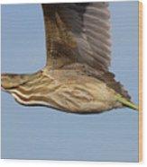 American Bittern Flies By Wood Print