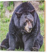 American Black Bear Wood Print