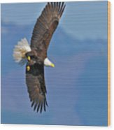American Blad Eagle On The Wing Wood Print