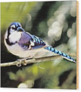 American Blue Jay On Alert Wood Print