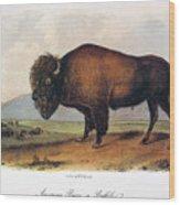 American Buffalo, 1846 Wood Print