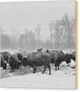 American Buffalo #2 Wood Print