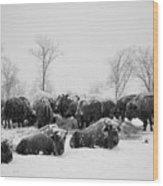 American Buffalo #3 Wood Print