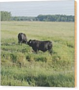 American Cattle Wood Print