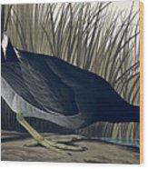 American Coot Wood Print