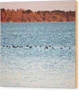 American Coots Crossing Lake Wood Print