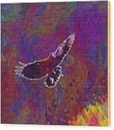 American Crow Flying Ave Fauna  Wood Print