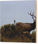 American Elk Wood Print by Carrie Putz