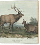 American Elk Wood Print
