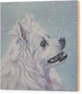 American Eskimo Dog In Snow Wood Print