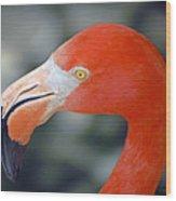 American Flamingo Wood Print