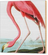 American Flamingo Wood Print by John James Audubon