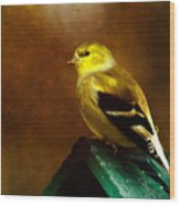 American Gold Finch In Texture Wood Print