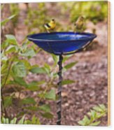American Goldfinch At Water Bowl Wood Print