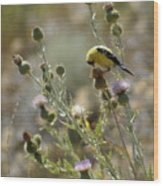 American Goldfinch Having Lunch On Bakery Hill Wood Print