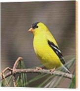 American Goldfinch II Wood Print