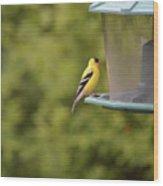American Goldfinch No Food  Wood Print