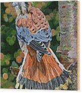 American Kestrel In My Garden Wood Print