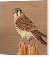 American Kestrel Surveying The Surroundings Wood Print