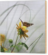 American Lady Butterfly Balancing By The Sea  Wood Print