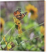American Lady Butterfly By The Beach Wood Print