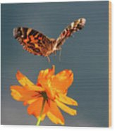 American Lady Butterfly Lands On Cosmos Flower Wood Print
