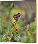 American Lady Butterfly Seaside Wood Print