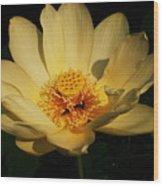 American Lotus Wood Print by Ron Kruger