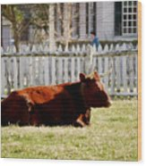 American Milking Devon In Spring Wood Print