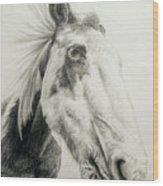 American Paint Horse Wood Print